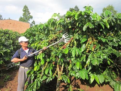 Máy thu hoạch cà phê Đức Quang